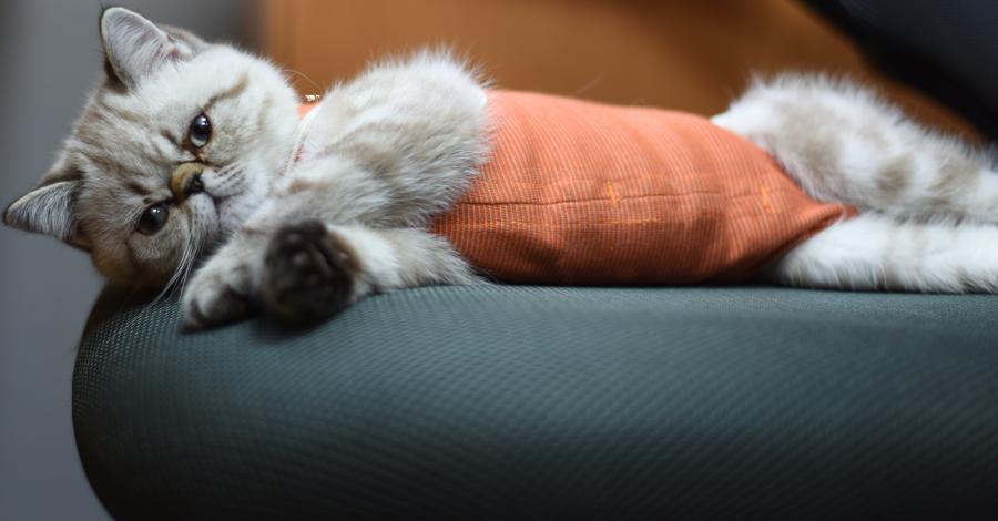 Body cobre gatos